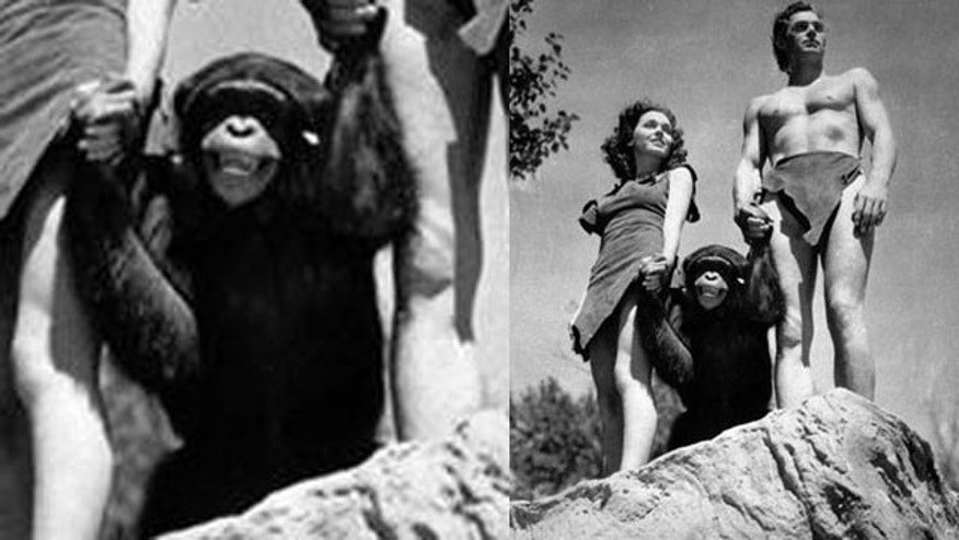 "The character of Cheetah, played by a number of chimpanzees over the years, first appeared in ""Tarzan the Ape Man"" (1932) starring Johnny Weissmuller and Maureen O'Sullivan."