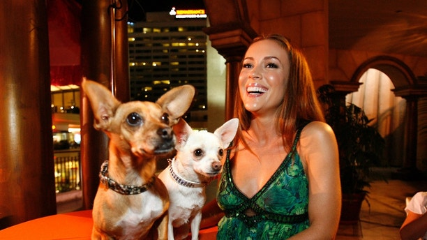 "Actress Alyssa Milano smiles next to Rusco (L) and Chihuahuas Angel, respectively Papi and Chloe in the movie, at the party following the world premiere of ""Beverly Hills Chihuahua"" in Hollywood, California September 18, 2008. The movie opens in the U.S. on October 3.   REUTERS/Mario Anzuoni   (UNITED STATES) - RTR221PY"