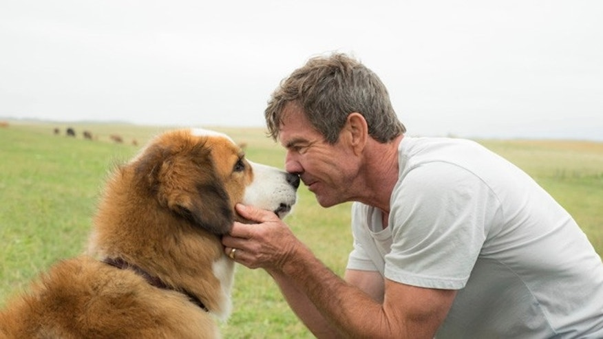 'A Dog's Purpose' is cleared of any mistreatment by American Humane.