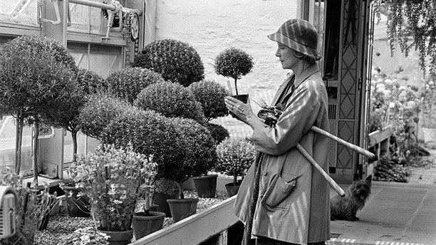 "5/18/1982 -  Rachel ""Bunny"" Lambert Mellon holding one of her miniature herb trees.  For these she uses rosemary, myrtle, thyme or santolina.  (Fred R. Conrad/The New York Times/Redux)"