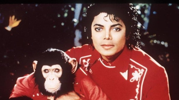 Michael%20Jackson%20lived%20with%20a%20chimpanzee%20named%20Bubbles%20in%20the%20late%201980s%20and%20the%20two%20were%20often%20photographed%20together.%20After%20the%20singer%E2%80%99s%20sudden%20death%20in%202009%2C%20People%20Magazine%20reported%20that%20then%2026-year-old%20Bubbles%20was%20living%20at%20a%20Florida%20primate%20sanctuary.%20It%20wasn%E2%80%99t%20known%20if%20any%20funds%20from%20Jackson%E2%80%99s%20estate%20would%20be%20used%20to%20support%20the%20chimp.%20%C2%A0%0A