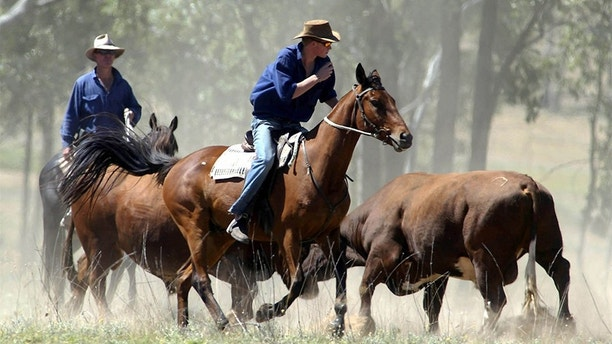 Britain's Prince Harry (C) herds bulls on his horse Guardsman atTooloombilla station in central outback Queensland, November 27, 2003. Theyoung royal has been working on the property as part of his gap year for$300 per week. Pictures of the Month November 2003  REUTERS/POOL/GarethCopleyASA/WS - RP4DRIFSCEAD