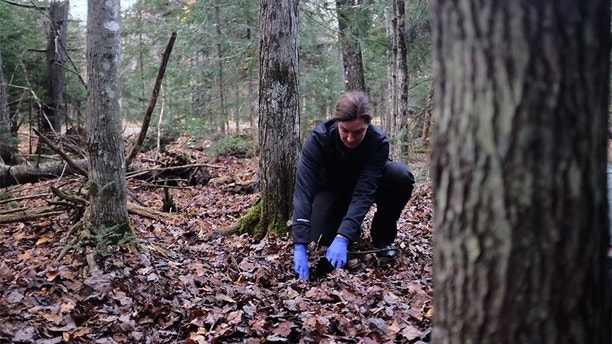 Laura Frizzo examines the woods.