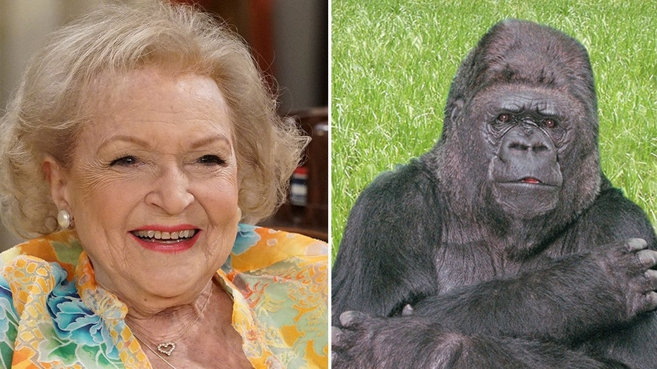 Betty White publicly mourned the loss of Koko the gorilla.