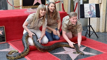 HOLLYWOOD, CA - APRIL 26:  (L-R) Terri Irwin, Bindi Irwin and Robert Irwin attend the ceremony honoring Steve Irwin with star on the Hollywood Walk of Fame on April 26, 2018 in Hollywood, California.  (Photo by Axelle/Bauer-Griffin/FilmMagic)
