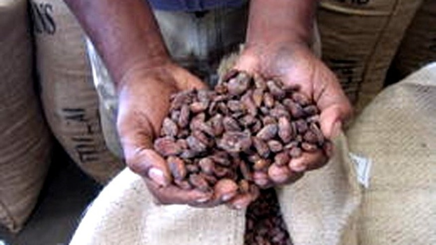 Cocoa beans produced by Valrhona Chocolate.
