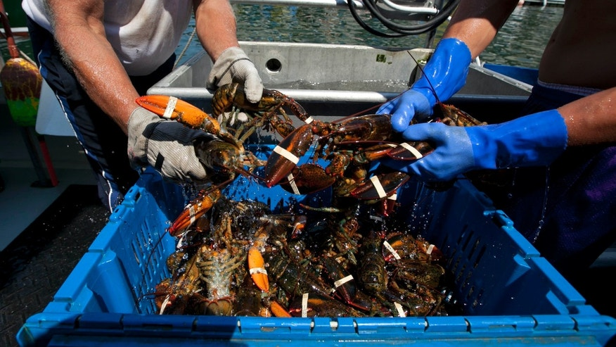 Aug. 9, 2012: Lobsters are unloaded from a fishing boat in Portland, Maine.