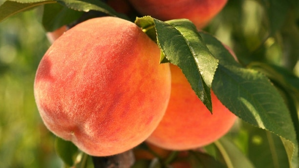 "<strong>Is It Ripe? </strong>""To pick a perfect peach, obviously you need to pick it off the tree yourself,"" says Clemson University peach specialist Desmond Layne. But for those of us who pick peaches in supermarkets and not in orchards, he has three simple suggestions: Smell it. Squeeze it. Look at where it's from."