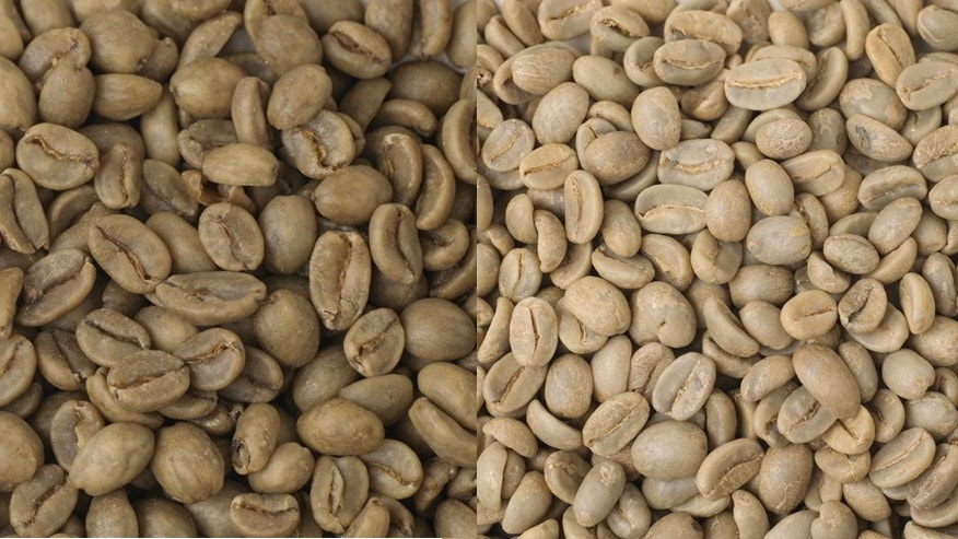 Green coffee beans before (L) and after (R) the decaffeination process.