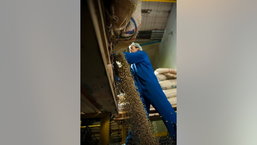 An operators dumping the beans into the decaffeination process machine.
