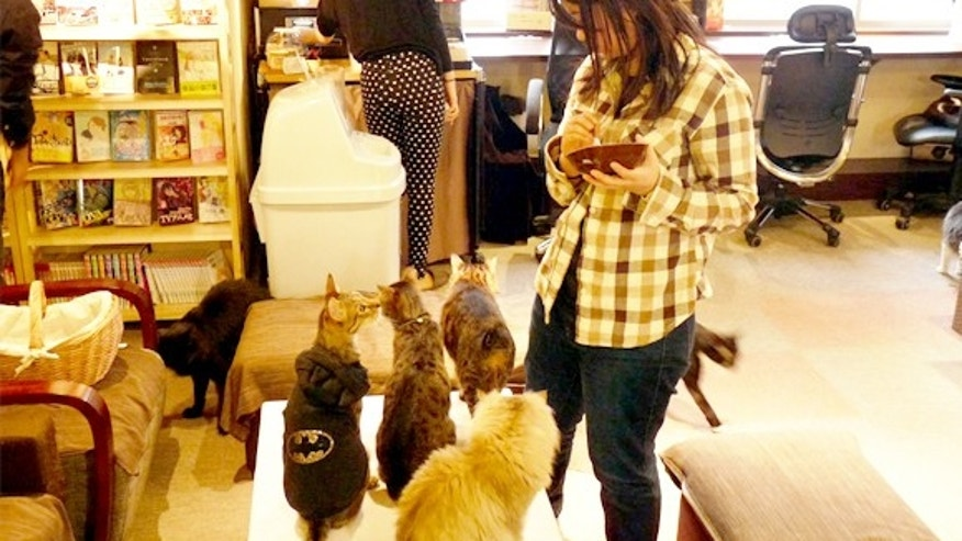 Cats gaze up at a shop customer.