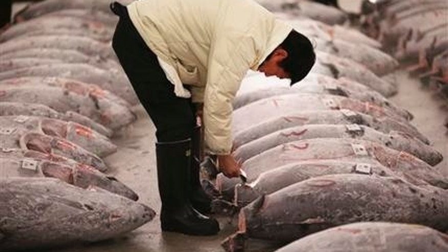 A prospective buyer inspects the quality of frozen tuna before the first auction of the year at Tsukiji fish market in Tokyo, Monday, Jan. 5, 2015.