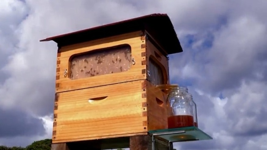 The Flow hive may revolutionize beekeeping practices.