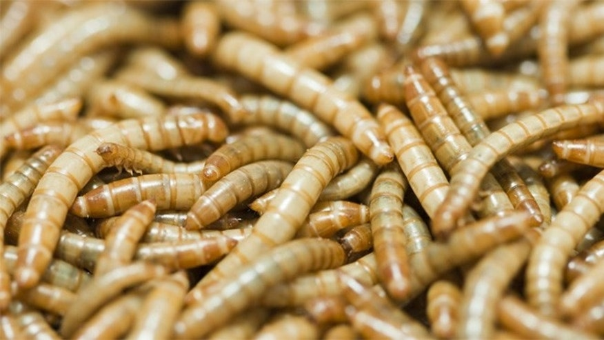 The esteemed French cooking school says insects are good to eat and good for the environment.