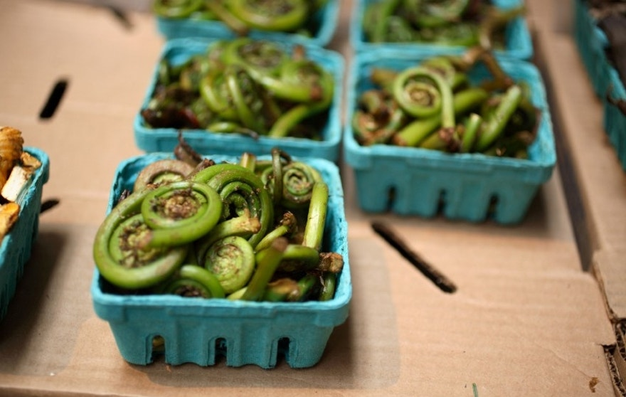 Funny looking fiddlehead ferns are a crisp and delicious alternative to traditional green beans.