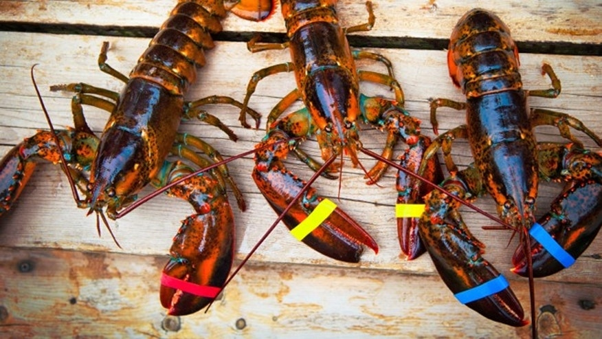 Lobsters are pricier this year than previous summers.