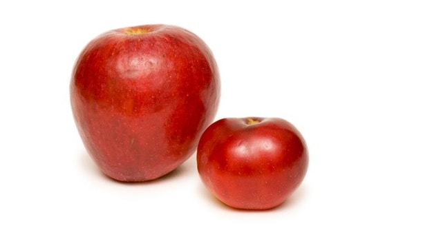 Two red apples: big one and small one isolated on white background.