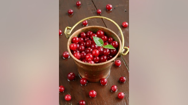 Little brass pail full of wild red cranberries on wet wooden background