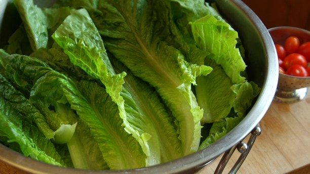 Horizontal image of romaine lettuce freshly washed and placed in a large stainless steel bowl. A small colander of cherry tomatoes is in the background. The image has shallow depth of field, the focus is on the center of the image.