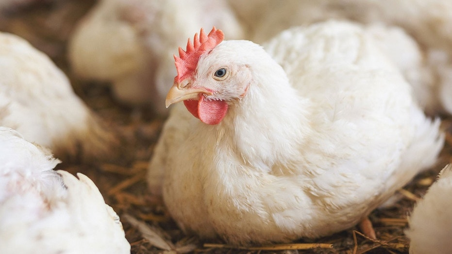 Perdue has announced plans to improve the lives of its chickens.