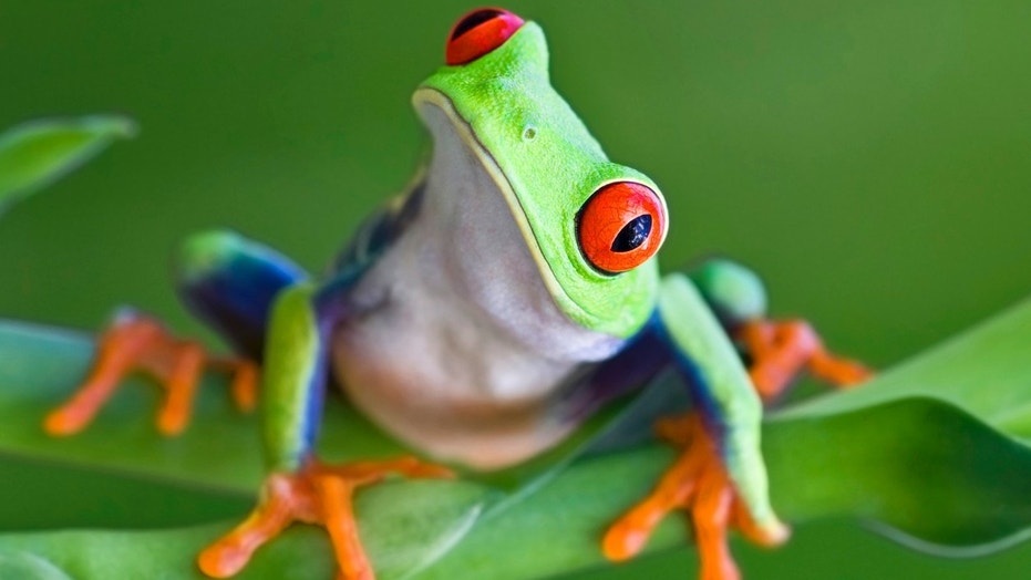 California woman finds live frog in her Target salad Fox News