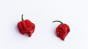 Carolina Reaper hot chilli isolated on white