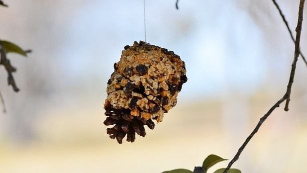 Birdfeeder created by smearing a pine cone with peanut butter and spreading oatmeal and raisin over the peanut butter.