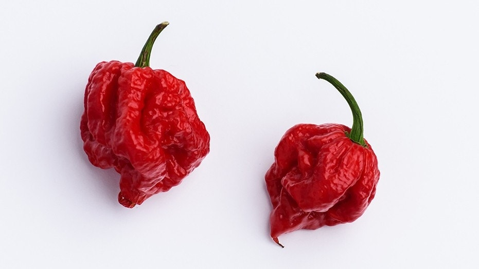 Hottest Pepper - Carolina Reaper Being Supported By Major Chili Grower