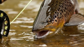 trout fishing istock