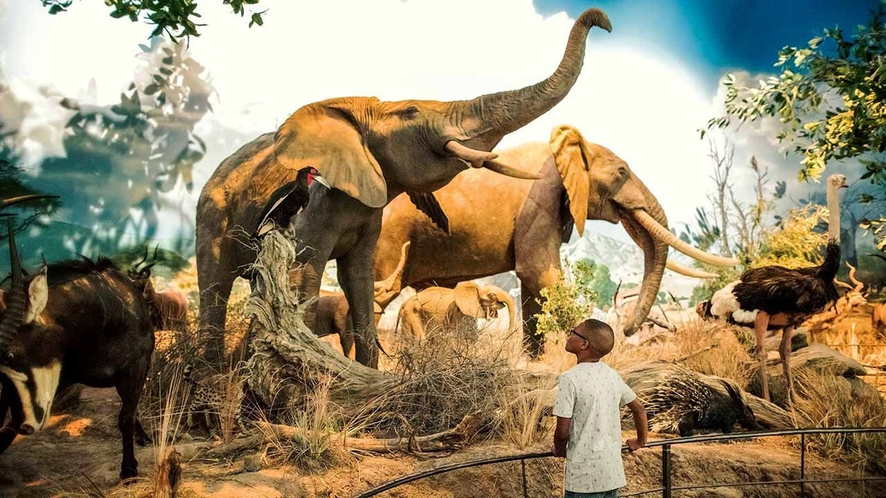 World's largest wildlife museum opens ahead of National Hunting and Fishing Day