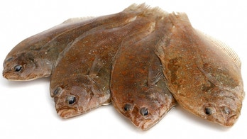 Four fresh flounder fishes on white background