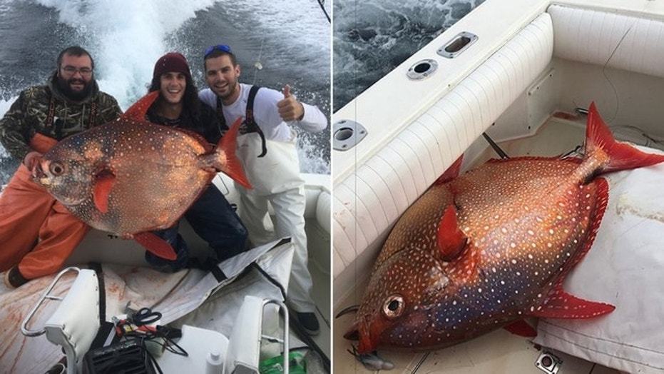 Ensor and his friends might be one the only non-commercial boat to have ever caught an opah in Ocean City.