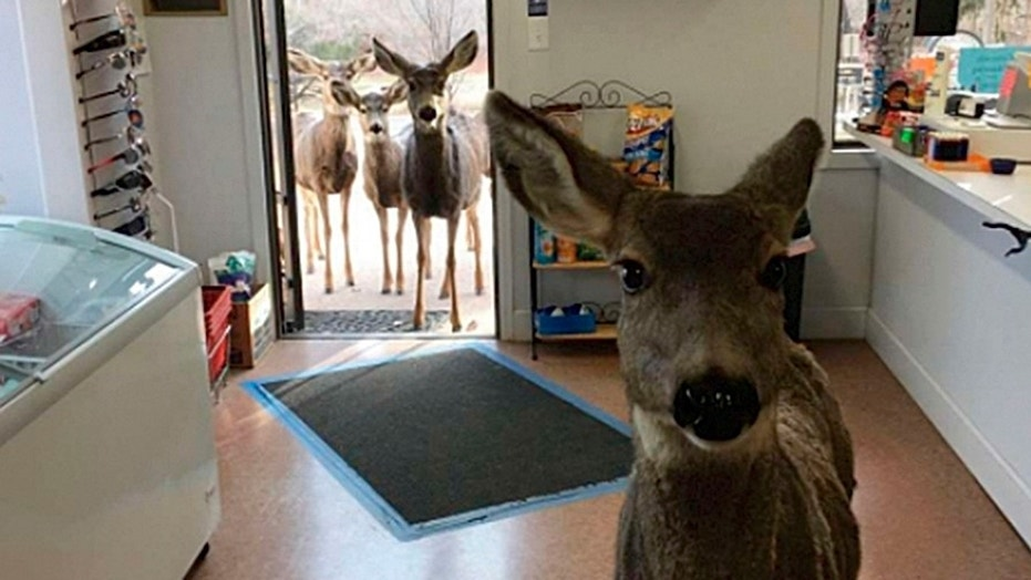 One woman's normal Tuesday turned into an impromptu wildlife photo shoot.