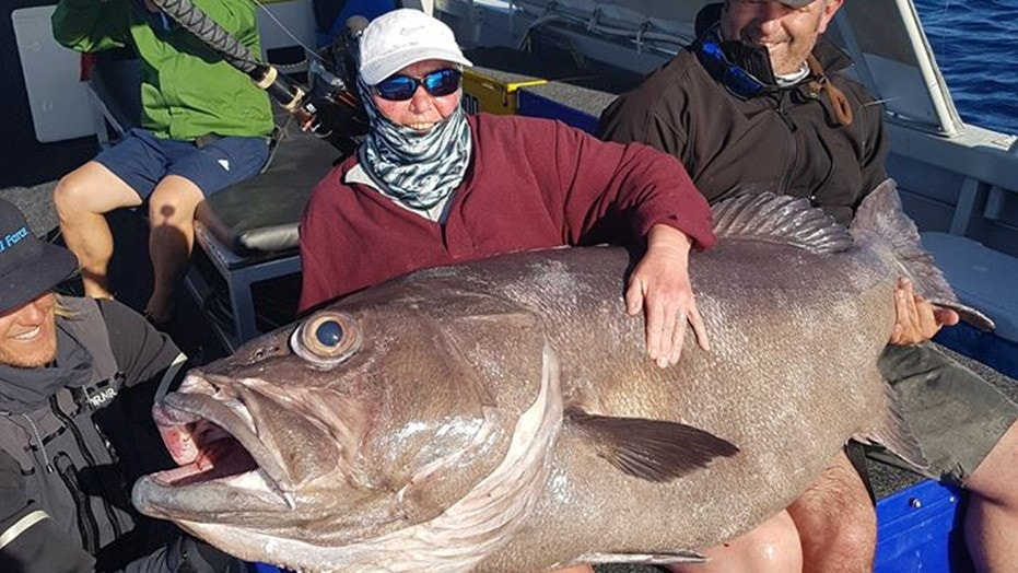 68 year old woman catches 130 pound monster fish on for Old wife fish
