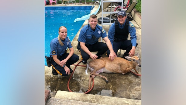 deer new jersey township of hamilton police department