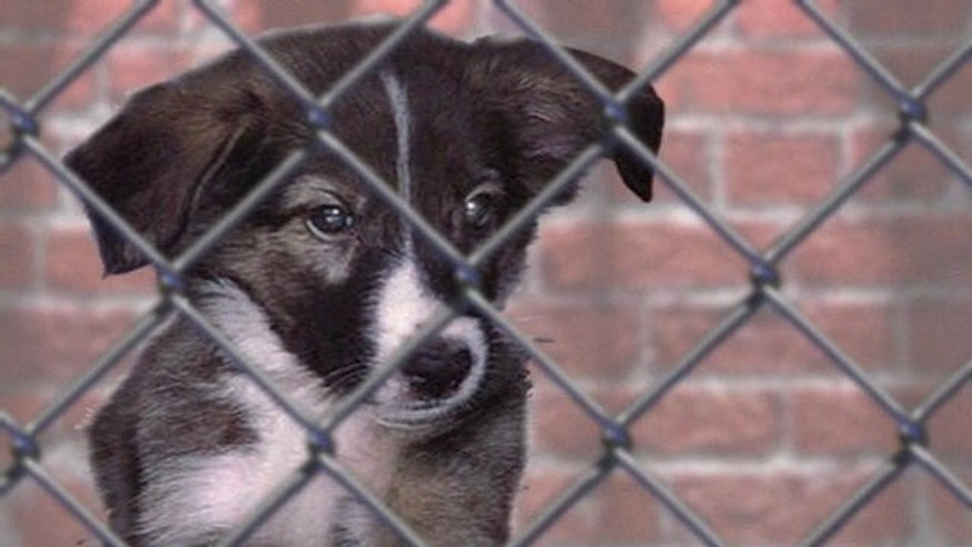 A hard-fought compromise over a crackdown on Missouri's infamous puppy mills has satisfied both sides in the state but national animal advocates are still howling over the events that preceded the deal, which they say lacks teeth.(AP)