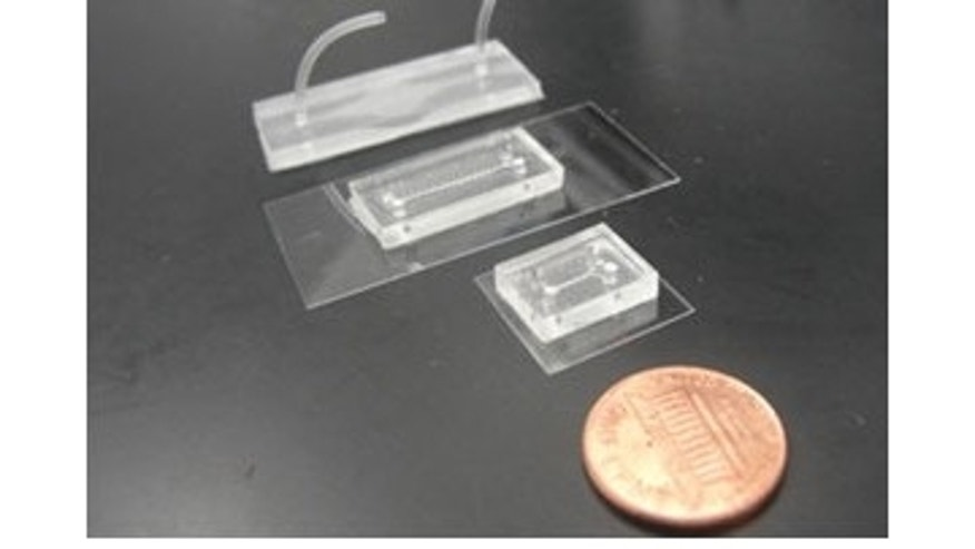 Each of these microchips contain living brain and circulatory system cells. In the future, such chips could be used to study basic brain functions and test drugs for neurological diseases.
