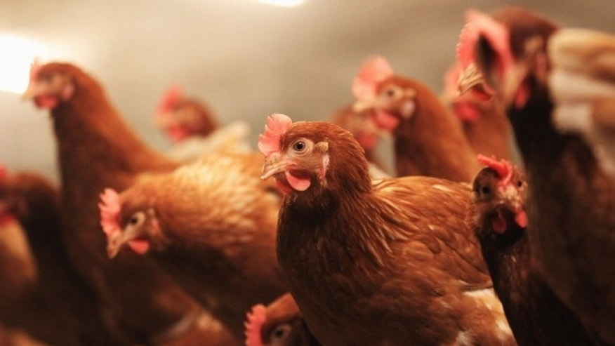 "An outbreak of the H7N3 virus has been ""totally controlled."""