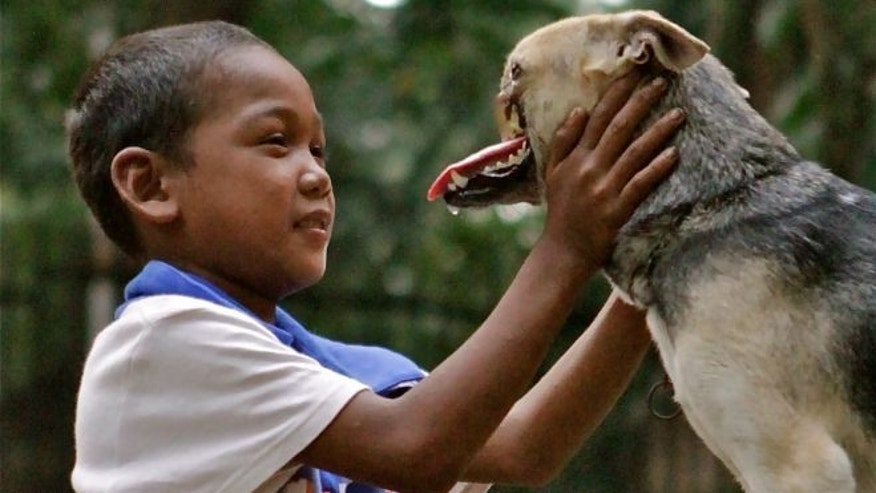 August 12, 2012: In this photo provided by the University of California - Davis, a Bunggal family member plays with Kabang the dog in the Philippines. The dog who lost its snout while saving two girls in the Philippines has been brought to the University of California, Davis, where veterinarians will try to fix its injuries