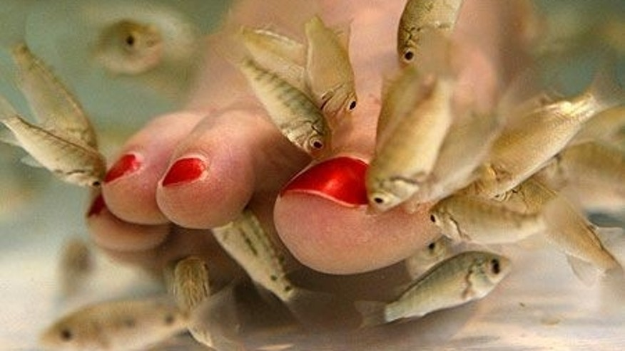 Fish pedicure case goes to court fox news for Fish pedicures illegal in 14 states