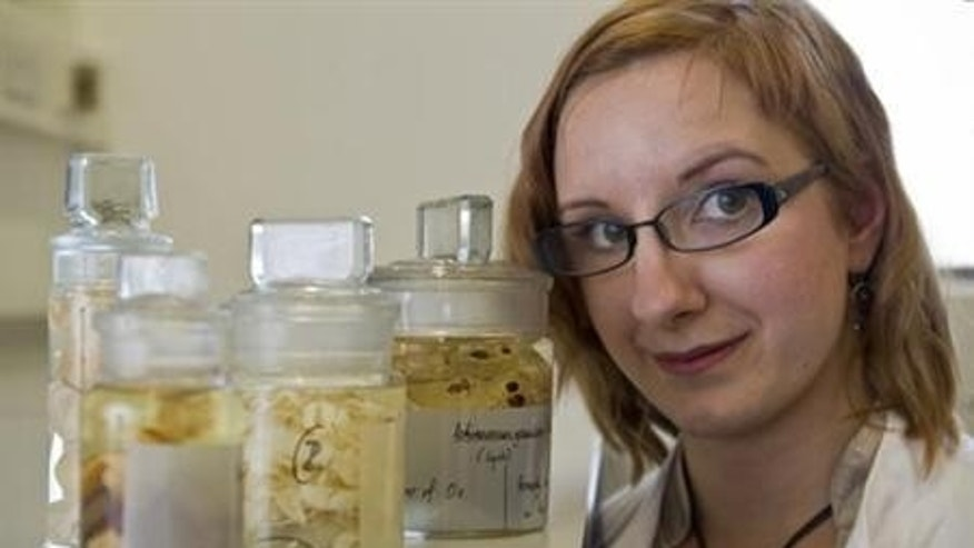 Researcher Magdalena Zarowiecki with tapeworm samples at the Wellcome Trust Sanger Institute in Cambridge. REUTERS/Wellcome Trust Sanger Institute/Handout