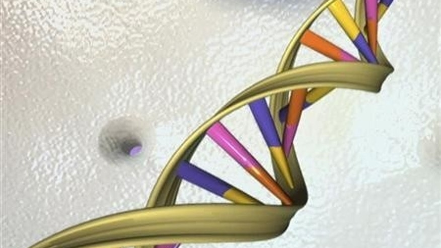 A DNA double helix is seen in an undated artist&#39&#x3b;s illustration released by the National Human Genome Research Institute to Reuters on May 15, 2012. REUTERS/National Human Genome Research Institute/Handout