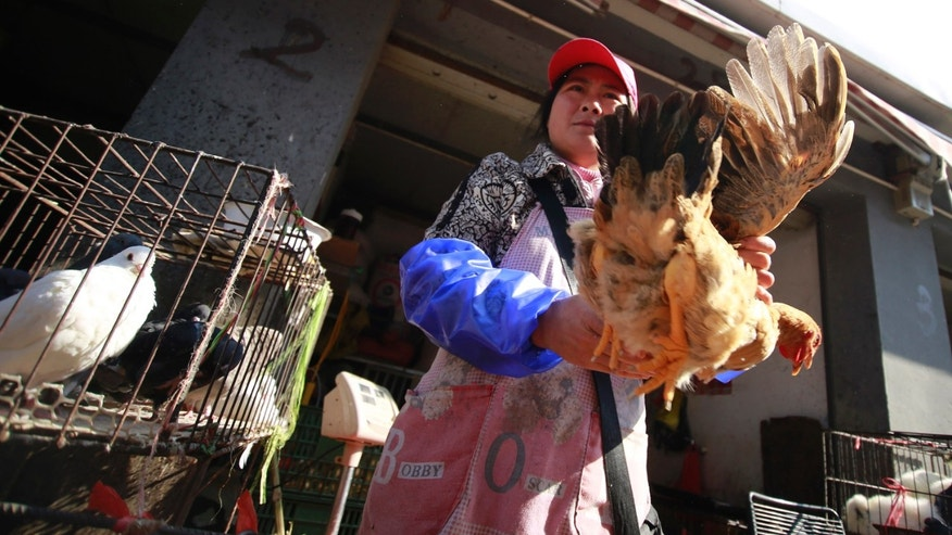 A vender holds a chicken at a chicken whole sale market in Shanghai, China. China's financial capital, Shanghai, activated an emergency response plan following the recent deaths of two men from a lesser-known strain of bird flu.