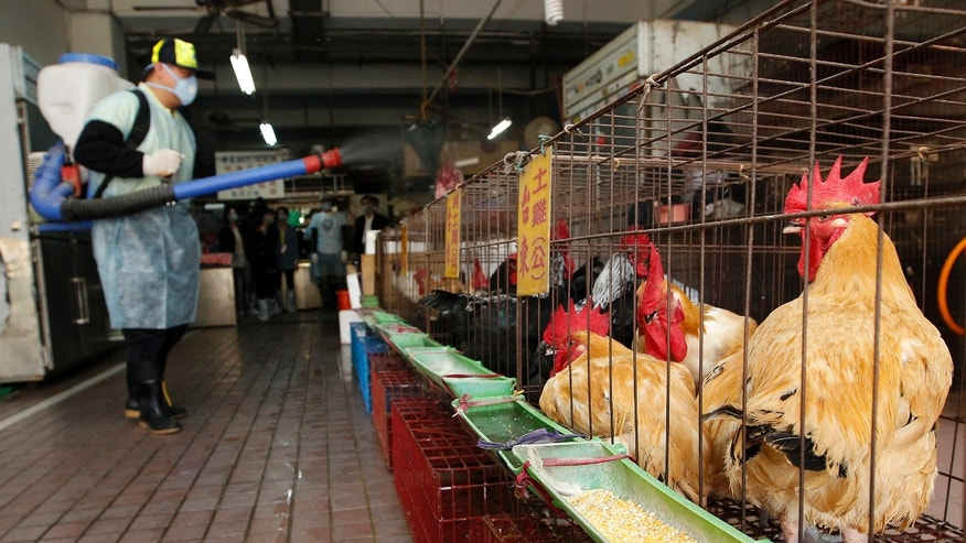 A New Taipei City Department of Environmental Protection worker sprays sterilising anti-H7N9 virus disinfectant around chicken stalls inside a market in New Taipei City April 8, 2013.