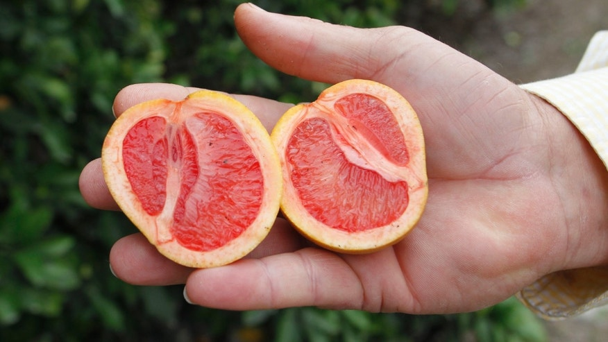"Citrus affected by ""greening,"" an insect-borne bacterial disease is shown as Larry Hardie, a grove manager for Barnes Citrus, Inc. holds malformed star ruby grapefruit in a grove in Vero Beach, Florida."