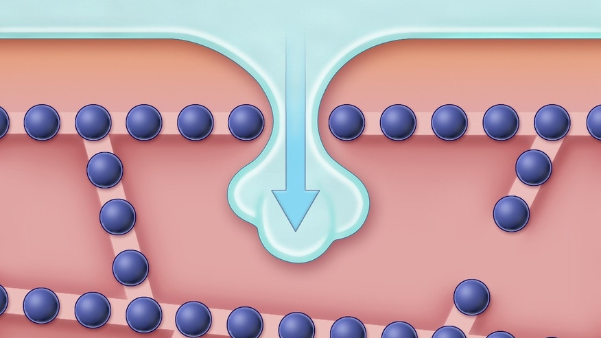 This illustration shows how ice invades the space between two cells, an event that triggers crystallization of the cell water. So-called tight junctions, which are depicted as small spheres arranged in rows, are embedded in the cell membrane and form seams that stitch the two cells together. Although these seams normally act as barriers that prevent ice from invading the tissue, research demonstrated that if the temperature is sufficiently low, extracellular ice can penetrate through nanoscale openings in the tight junction seams.