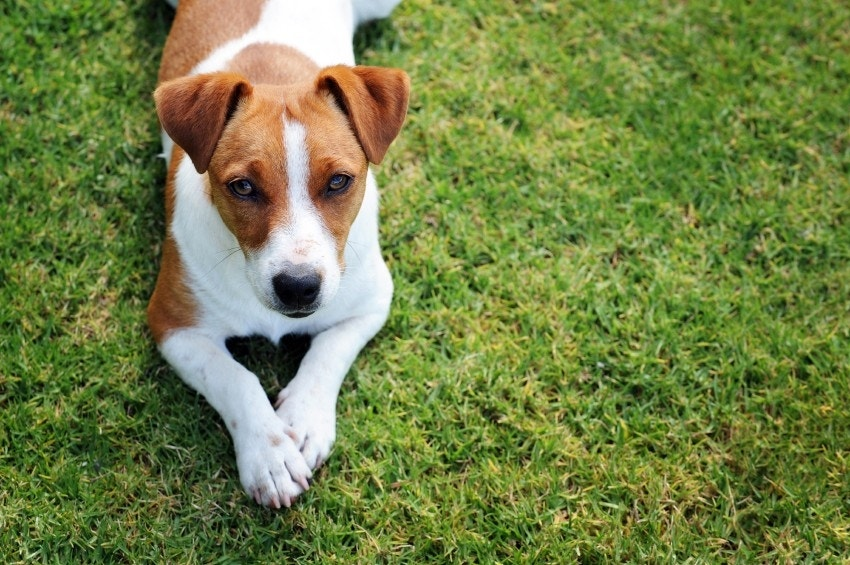 How Can Dogs Help Improve A Owners Social Skills