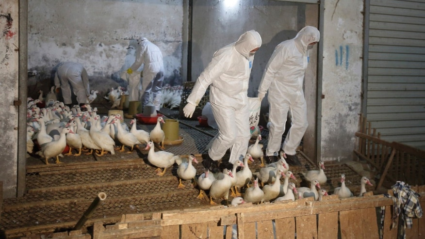 Health officials in protective suits transport sacks of poultry as part of preventive measures against the H7N9 bird flu at a poultry market in Zhuji, Zhejiang province January 6, 2014. (REUTERS/Stringer)