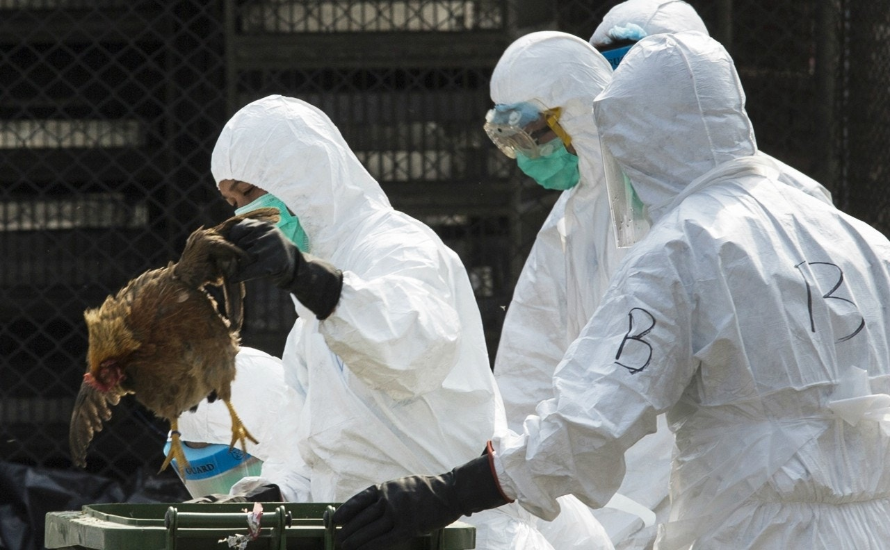 Scientists sound warning after first death from new H10N8 bird flu reported