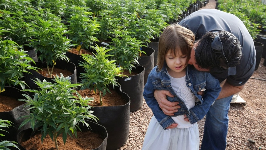 Matt Figi hugs his once severely-ill 7-year-old daughter Charlotte, as they wander around inside a greenhouse for a special strain of medical marijuana known as Charlotte's Web, which was named after the girl early in her treatment. (AP Photo/Brennan Linsley)